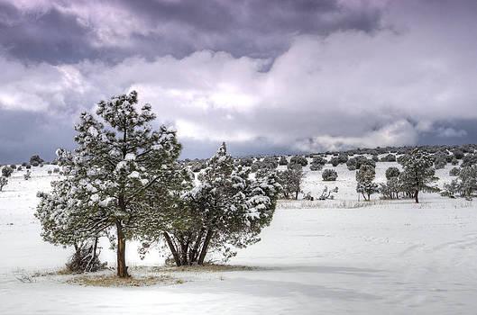 Saija  Lehtonen - High Desert Snow