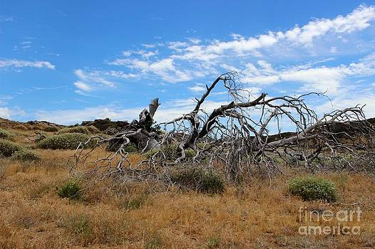 High Desert Wood by Laura Paine