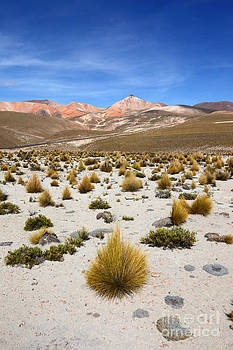 James Brunker - High in the Chilean Altiplano
