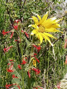 High Meadows in Colorado by Dana Carroll