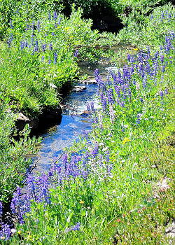 High Mtn Creek w Lupine by Vicki Coover