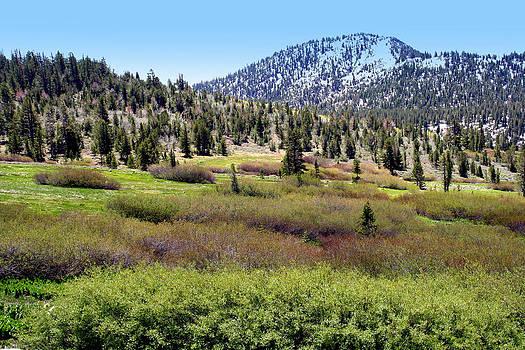 Lynn Bawden - High Sierra Mountain Meadow