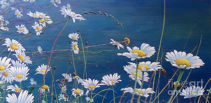 High Valley Daisies by Phillip  Powell
