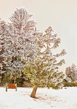 Highdrive tree by Dan Quam