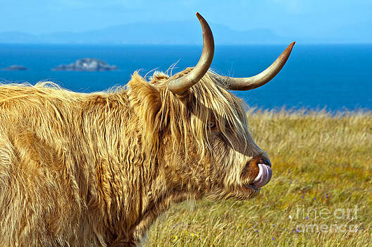 Highland Beauty by Bel Menpes