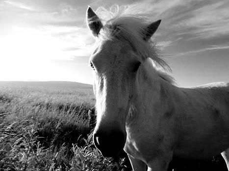 Sarah Pemberton - Highland Horse