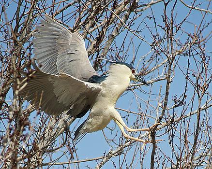 Hight Heron Chasing by Stephen  Johnson