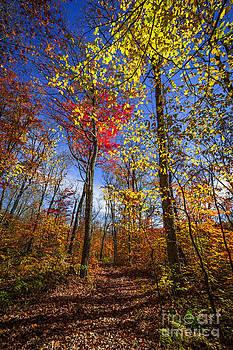 Elena Elisseeva - Hiking trail in fall forest