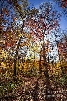 Elena Elisseeva - Hiking trail in sunny fall forest