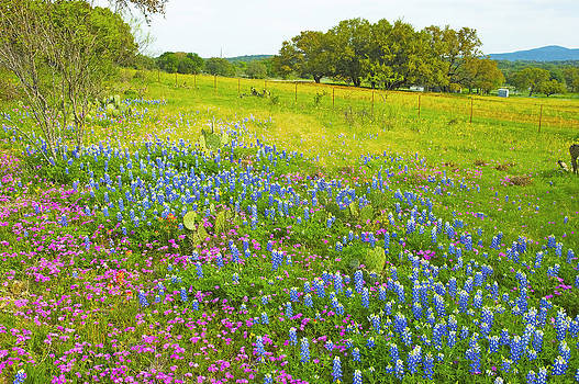 Robert Anschutz - Hill Country Color