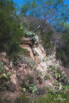 Hill Country Rock and Cactus  9203 by Fritz Ozuna