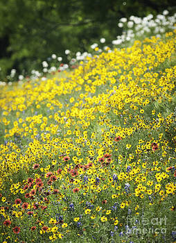 Hill Country Wild Flowers 5 by Richard Mason