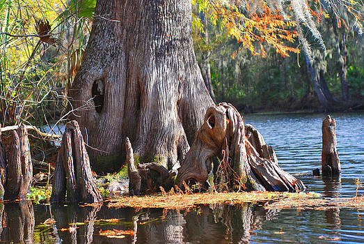 Carol Kay - Hillsborough River Autumn 09