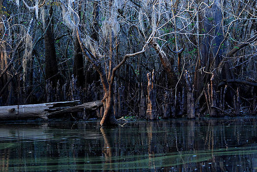 Carol Kay - Hillsborough Swamp Autumn 18
