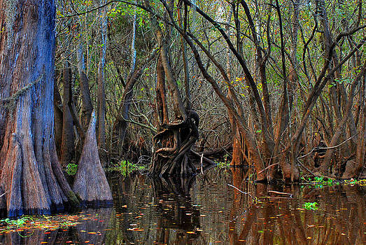 Carol Kay - Hillsborough Swamp Autumn 23
