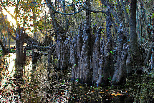 Carol Kay - Hillsborough Swamp Autumn 26