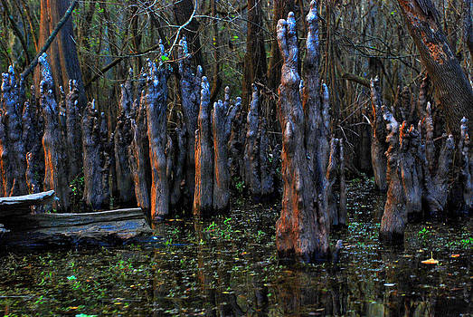 Carol Kay - Hillsborough Swamp Autumn 30