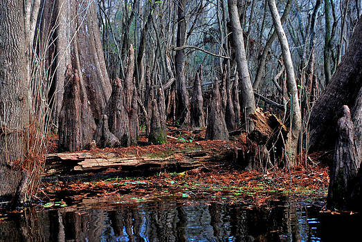 Carol Kay - Hillsborough Swamp Autumn 41