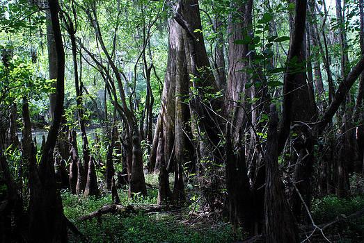 Carol Kay - Hillsborough Swamp Spring 03