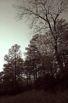 Nina Fosdick - Hillside Trees