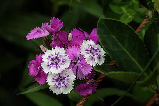 Himalayan Bouquet by Rohit Chawla