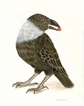 Himalyan Crow by Wicki Van De Veer