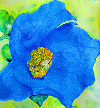 Himalayan Poppy by Louise Grant