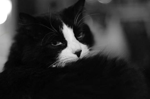 Hindered Slumber by Sandra Kelly