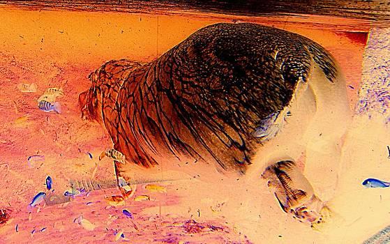 Hippo Elegance by Antonia Citrino