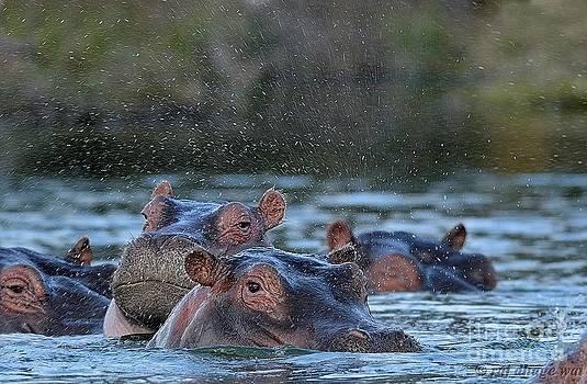 Hippo by Raj Dhage