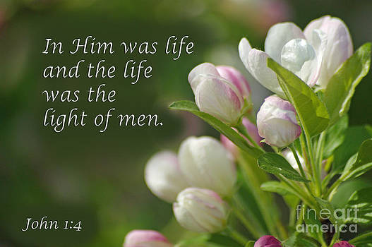 His Life is our Light by Robin Clifton