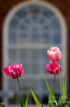 Historical Home with Pink Tulips by Karen Lee Ensley