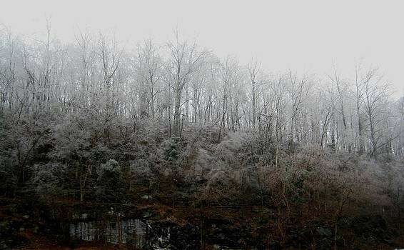 Hoary Forests Of Tennessee by Melissa McCrann