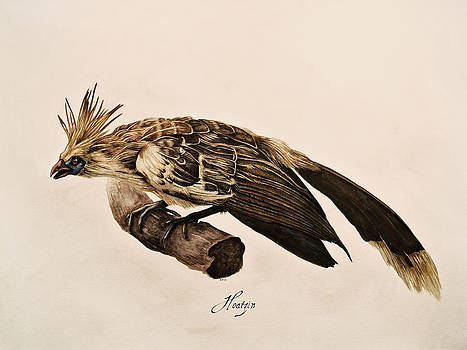 Hoatzin by Rachel Root