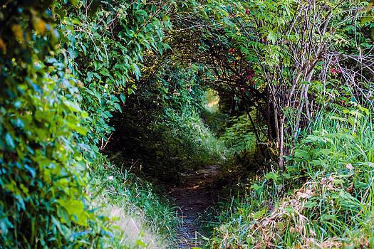 Hobbit Trail by Ed Nicholles
