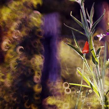 Hobbitowo by Sylvia Lakoma