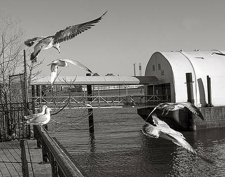 Hoboken Birds1 by Timothy Dingman