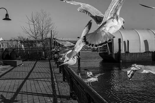 Hoboken Seagull 2 by Timothy Dingman