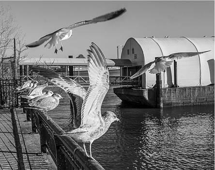 Hoboken Seaguls 3 by Timothy Dingman
