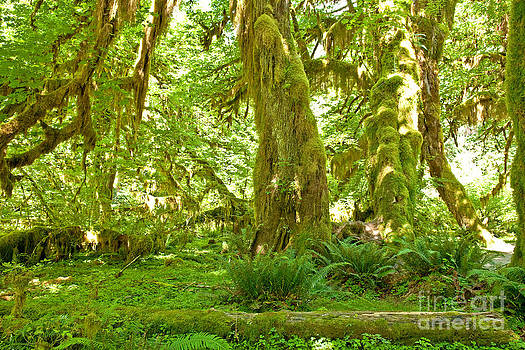 Hoh moss trees 1 by Russell Christie