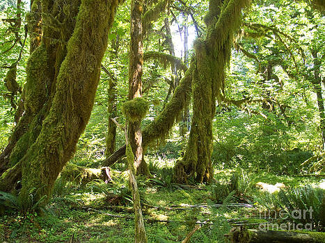 Hoh rain forest 2 by Russell Christie
