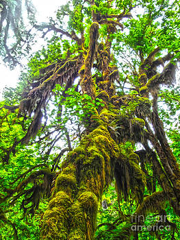 Gregory Dyer - Hoh Rainforest