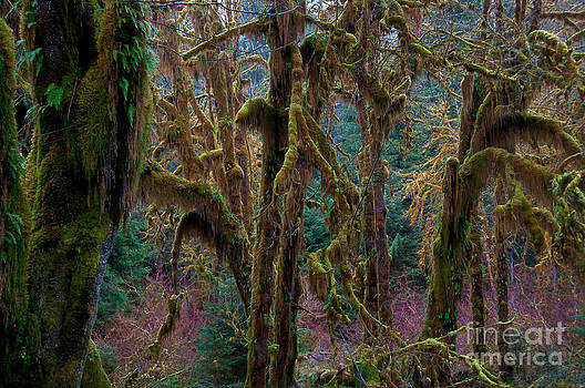 Mark Newman - Hoh Rainforest, Olympic National Park