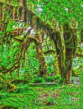 Gregory Dyer - Hoh Rainforest - spooky trees
