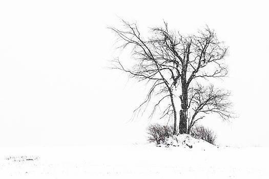Holland Glenwood Tree by Don Nieman