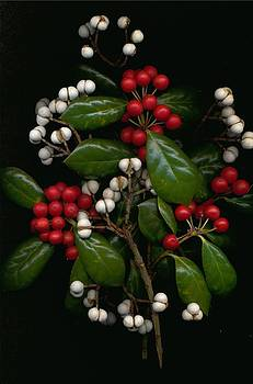 Holly Branch and Seed Pods by Kathleen Palermo