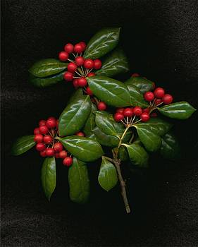 Holly by Kathleen Palermo