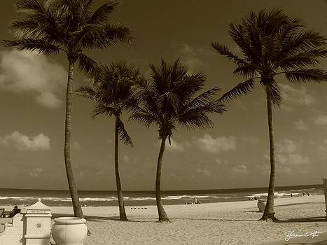 Hollywood Palms In Sepia by Shawn Lyte