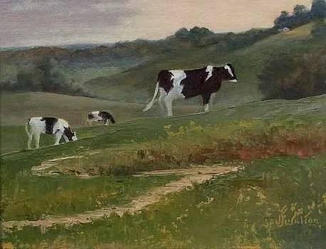 Holstein Morning by Judy Fisher Walton