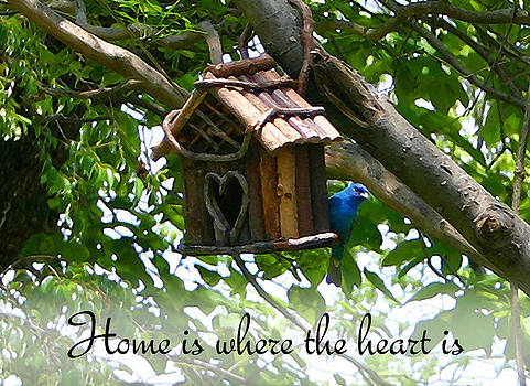 Nina Fosdick - Home is where the heart is